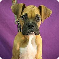 Adopt A Pet :: Elbert - Broomfield, CO