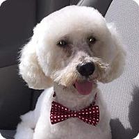 Adopt A Pet :: Rémy - McLoud, OK