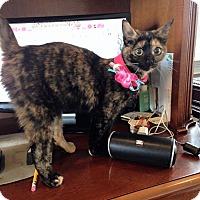 Adopt A Pet :: Monkey - Trevose, PA