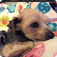 Adopt A Pet :: Lucky Eddie - Canton, IL
