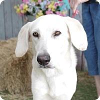 Adopt A Pet :: Lucien - Inverness, FL