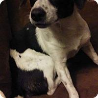 Adopt A Pet :: Princess meet me 4/7 - Manchester, CT