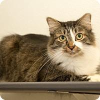 Adopt A Pet :: Princeton - Martinsville, IN