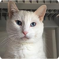 Adopt A Pet :: Poppi - Gilbert, AZ