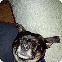 Adopt A Pet :: Finn - Minneapolis, MN