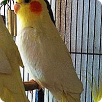 Adopt A Pet :: Blaine - Lenexa, KS