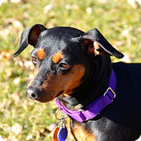Adopt A Pet :: Roxie - Nashville, TN