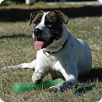 Adopt A Pet :: Scrappy Duke - Buffalo, WY