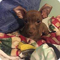 Adopt A Pet :: Timmy - San Diego, CA
