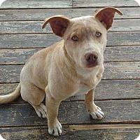 Adopt A Pet :: Cooper - Lander, WY