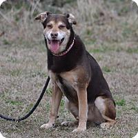 Adopt A Pet :: Baer - Lebanon, MO