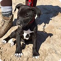 Adopt A Pet :: Denali - Grafton, WI