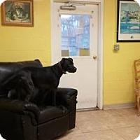 Adopt A Pet :: Jagger - Reisterstown, MD