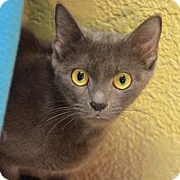 Adopt A Pet :: 10310347 - Brooksville, FL