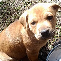 Adopt A Pet :: 'MOUSE' - Brooksville, FL