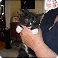 Adopt A Pet :: Alex - Riverside, RI