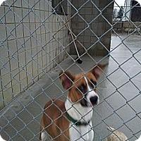 Adopt A Pet :: Emmet - Wallaceburg, ON
