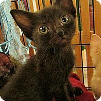 Adopt A Pet :: Morgan - Long Beach, CA