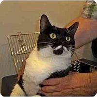 Adopt A Pet :: Tuxie - Secaucus, NJ