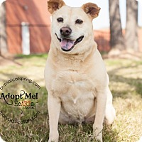 Adopt A Pet :: Lucy - Cat Spring, TX