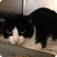 Adopt A Pet :: Logozzo - Hamilton, ON
