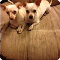 Adopt A Pet :: Nini - Seattle, WA