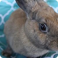 Adopt A Pet :: Dusty - Hillside, NJ