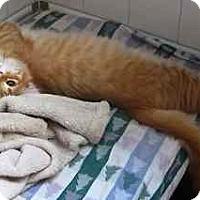 Adopt A Pet :: Nod - Davis, CA