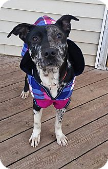 Catahoula Leopard Dog Mix Dog for adoption in Tower City, Pennsylvania - Vespa