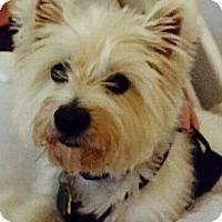 Adopt A Pet :: FRED - Frisco, TX