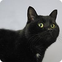 Adopt A Pet :: Leonard - Winchendon, MA