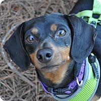 Adopt A Pet :: Erika Jayne - Atlanta, GA
