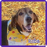 Adopt A Pet :: Reba - Jasper, IN