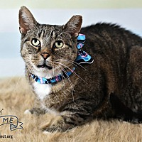 Adopt A Pet :: Big Boy - Wayne, PA