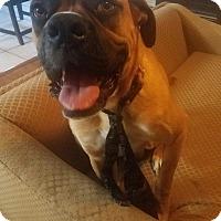 Adopt A Pet :: Digby - Austin, TX