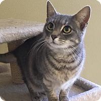 Adopt A Pet :: Violet - Cashiers, NC