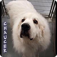 Adopt A Pet :: Chaucer - 137 / 2017 - Maumelle, AR