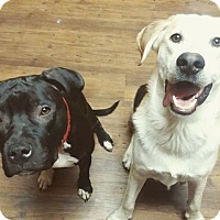 Adopt A Pet :: Anna - Huntington, IN