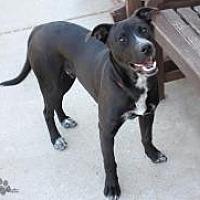 Labrador Retriever Mix Dog for adoption in Yukon, Oklahoma - Ferdinand