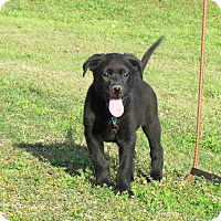 Adopt A Pet :: SAYDI - Bedminster, NJ