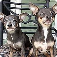 Adopt A Pet :: Rico - Fort Lauderdale, FL
