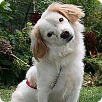 Adopt A Pet :: Zeus - West Hills, CA
