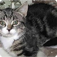 Adopt A Pet :: Tatianna - Catasauqua, PA