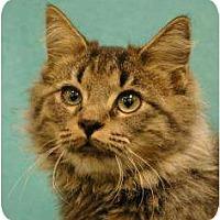 Adopt A Pet :: Royce - Sacramento, CA