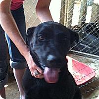 Adopt A Pet :: Honda - Colfax, IL