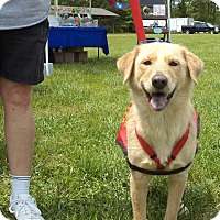 Adopt A Pet :: Jessie - Scotland Neck, NC