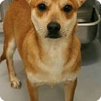 Adopt A Pet :: BUSTER- PENDING ADOPTION!! - Birmingham, MI