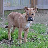 Shepherd (Unknown Type) Dog for adoption in Jackson, Mississippi - Glen Frey