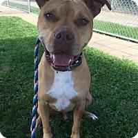 Adopt A Pet :: Higbee - Lake Odessa, MI