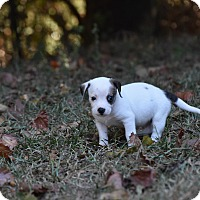 Adopt A Pet :: Dallas - Groton, MA